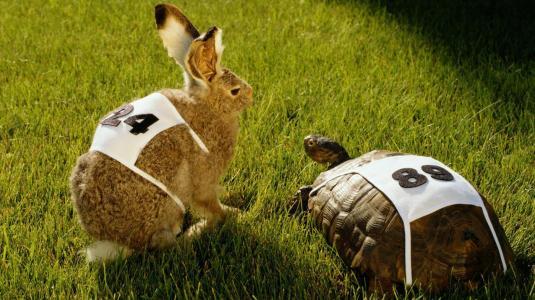 moral-lesson-story-rabbit-turtle-race_cf23adab692f68cc