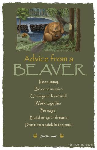 beaver tshirt