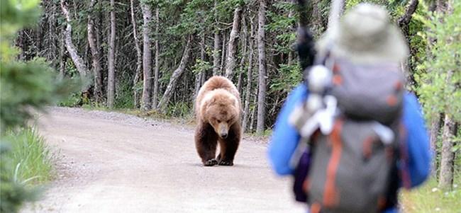 bearsafety_3_1
